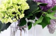 Blumen in Zahnarztpraxis Dr. Brigitte Simon Stuttgart